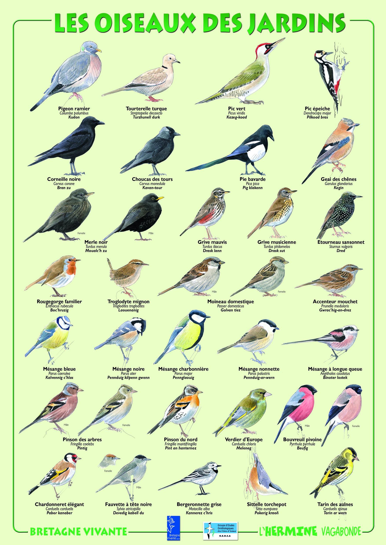 op ration oiseaux des jardins geoca groupe d 39 etudes ornithologiques des c tes d 39 armor. Black Bedroom Furniture Sets. Home Design Ideas
